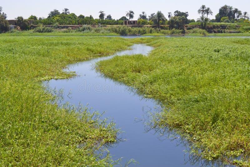 Kleine stroom door moerasland stock afbeeldingen