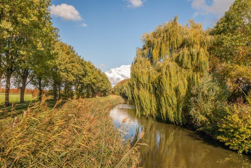 Kleine stroom in een landelijk landschap met bloeiende riet binnen installaties stock afbeelding
