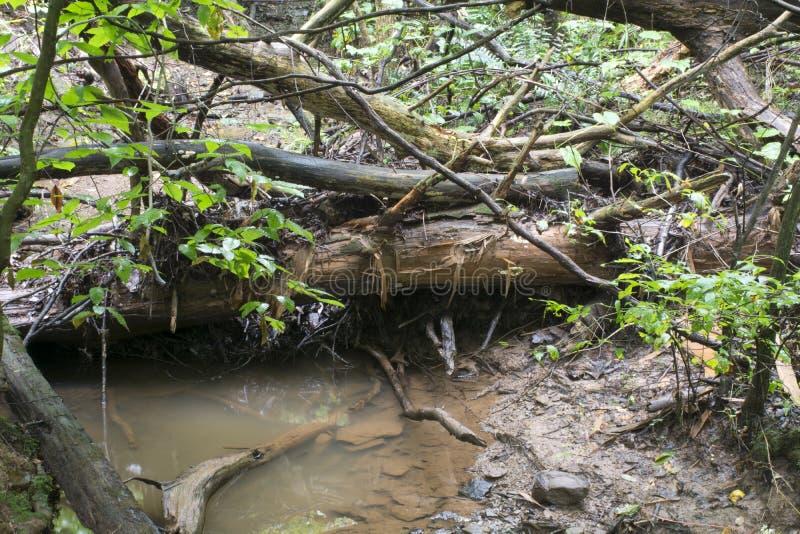 Kleine stroom en gevallen bomen stock afbeeldingen