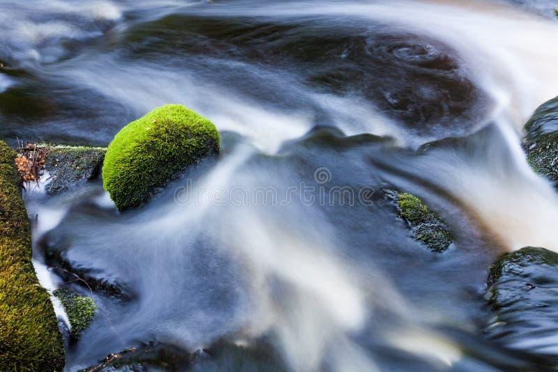 Kleine stroom in gemengd bos stock afbeeldingen