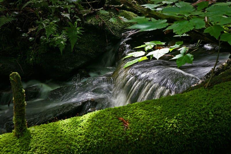 Kleine stroom in het bos in Quebec Canada stock afbeeldingen