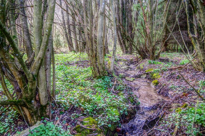 Kleine stroom in het de lentebos stock afbeeldingen