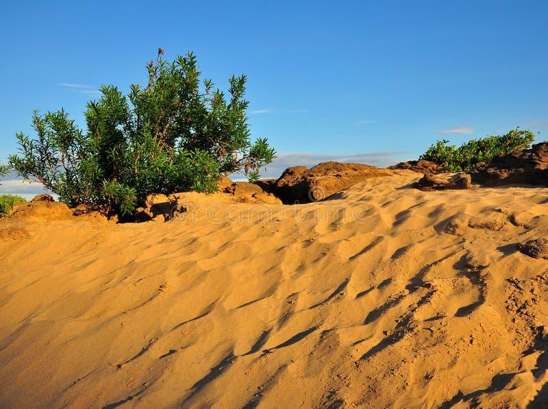 Kleine struikinstallaties in woestijn stock afbeeldingen