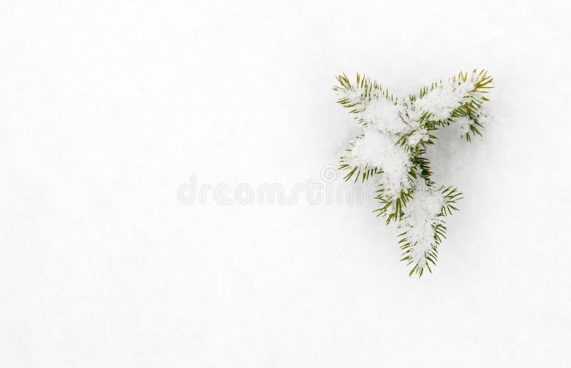 Kleine Tanne im Schnee stockfotos