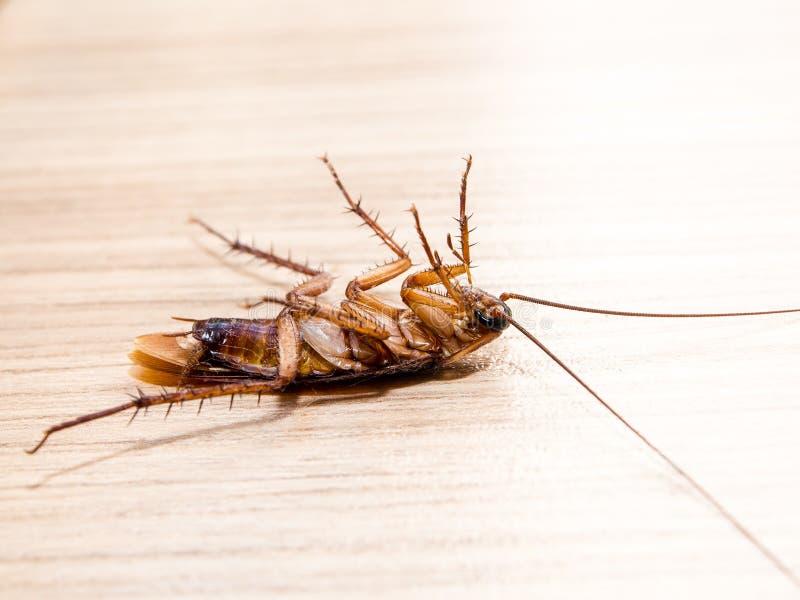 Kleine Tiere der Schaben lenken ärgerliche Krankheitsursachen ab lizenzfreie stockbilder