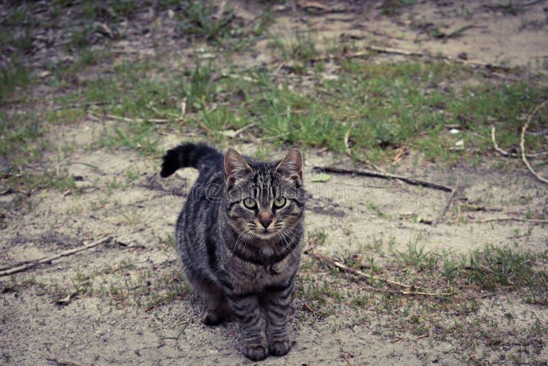 Kleine Tigerkatze stockfotos