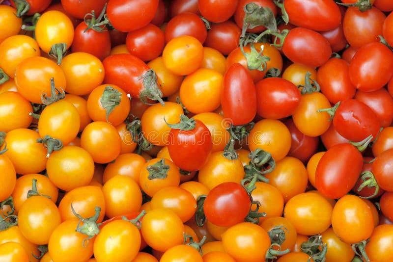 Kleine tomaten stock fotografie