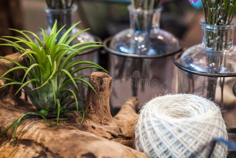 Kleine tuin met miniatuurcactuse stock fotografie