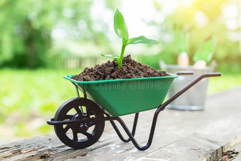 Kleine tuinkruiwagen met het kweken van zaailing in de grond royalty-vrije stock fotografie