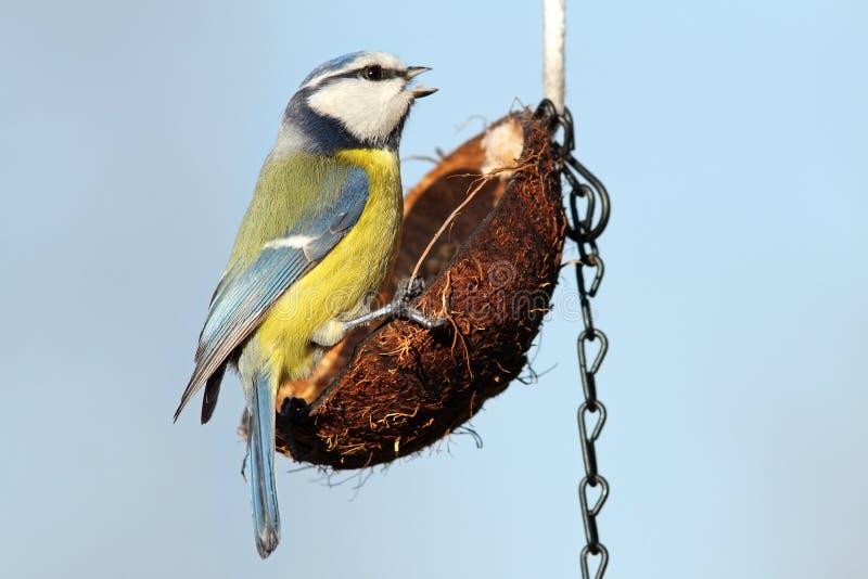 Kleine tuinvogel op voeder royalty-vrije stock foto's