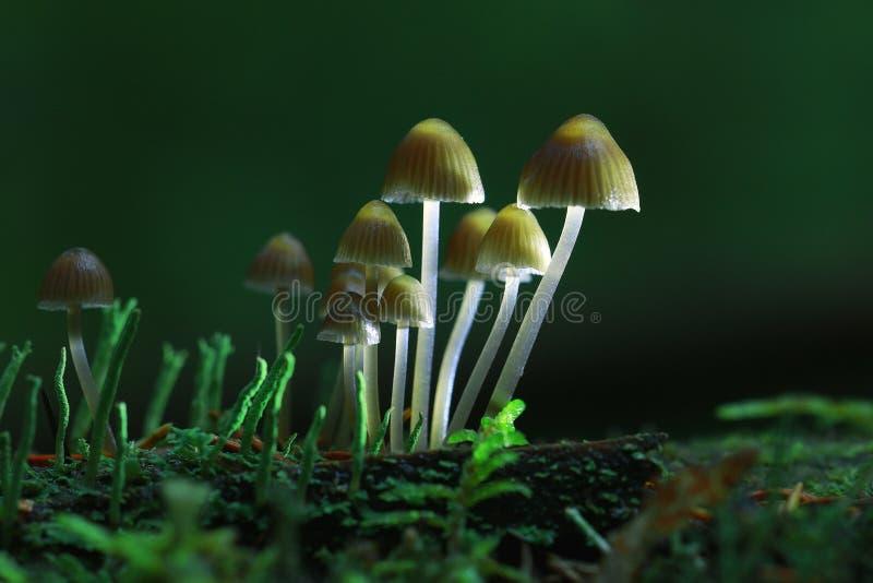 Kleine ungenießbare Pilze stockfoto