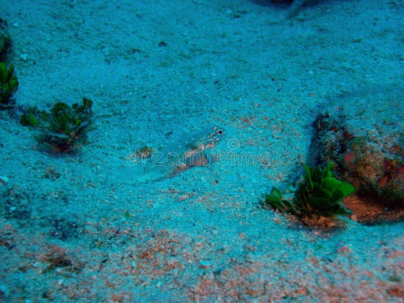 Kleine untere Fische lizenzfreie stockfotos