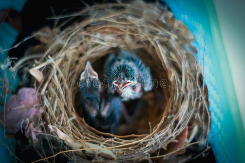 Kleine Vögel stockbilder