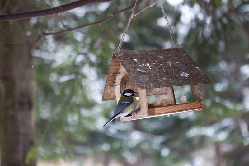 Kleine Vögel in der Vogelzufuhr in der Winterschnee-Waldmeise sitzt auf einer Niederlassung Haus für Vögel Ein kleines Haus im Wa lizenzfreie stockbilder