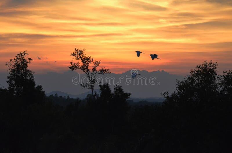 Kleine Vögel fliegen morgens unter das Licht von Dämmerung stockfotos