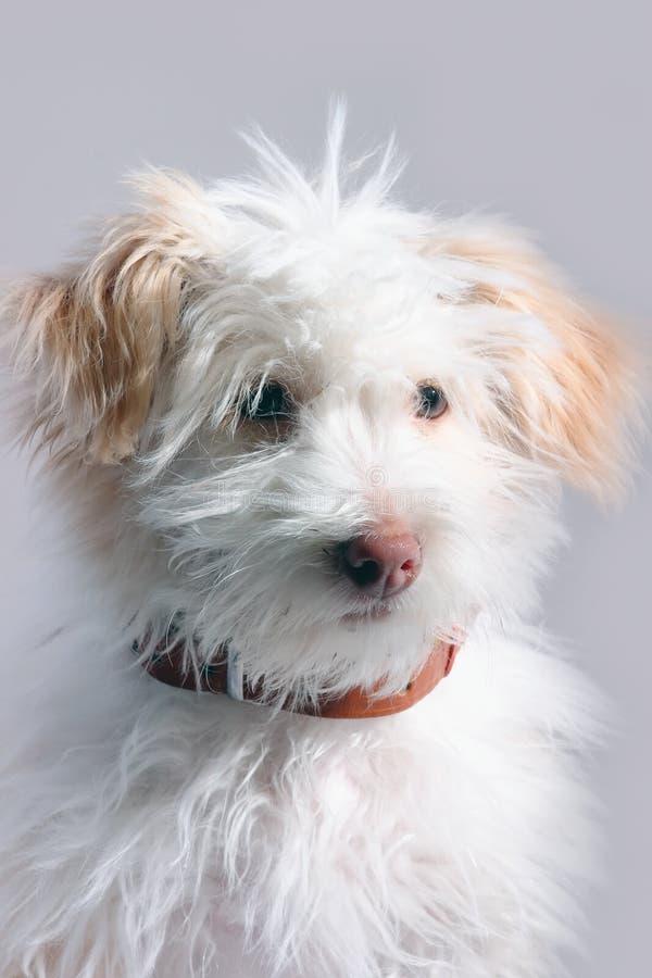 Kleine van een hond stock afbeeldingen