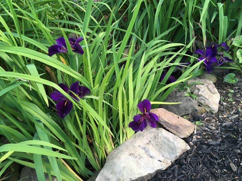 kleine vijver in Afro de tuin royalty-vrije stock afbeelding