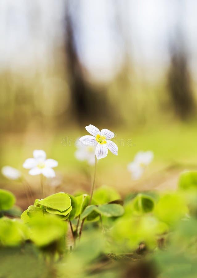 Kleine violette bloem stock afbeelding
