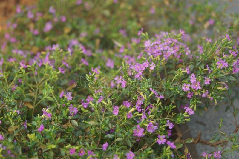 Kleine violette bloemen stock fotografie
