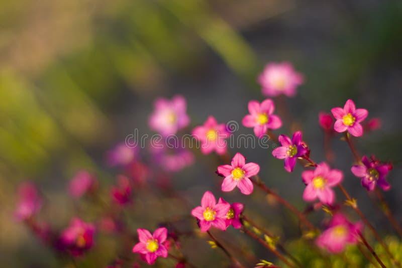 Kleine violette Blumen stockbilder