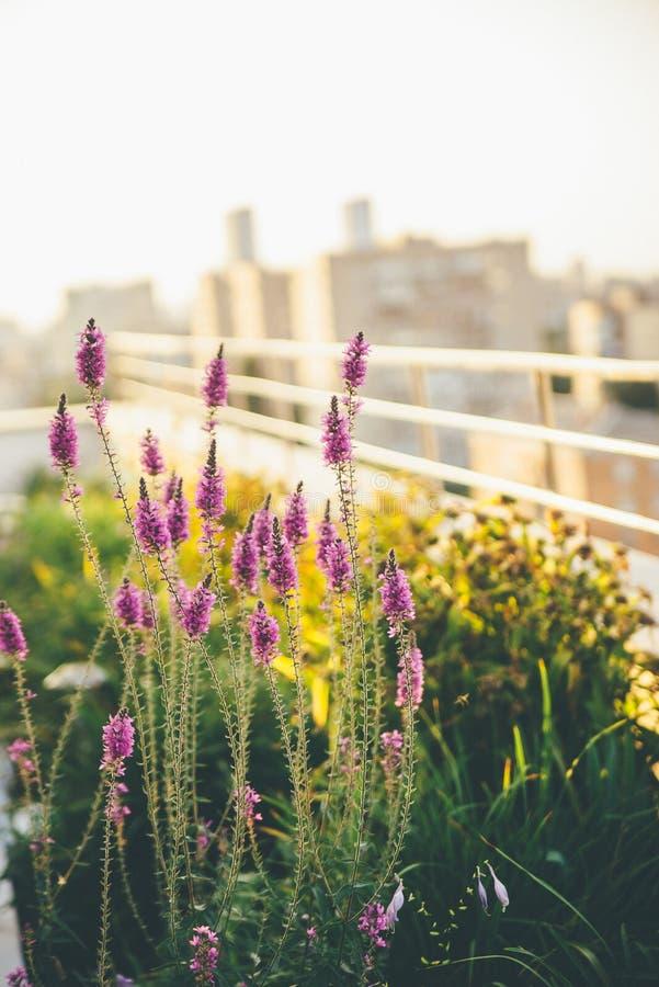 Kleine violette Blumen am Balkon mit unscharfem Hintergrund stockfotografie
