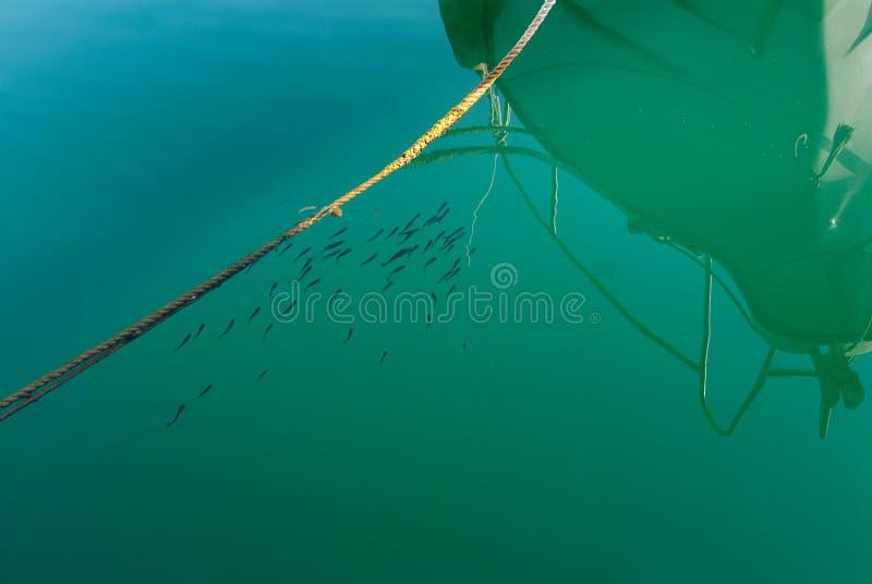 Kleine vissen in haven dichtbij boot royalty-vrije stock foto's