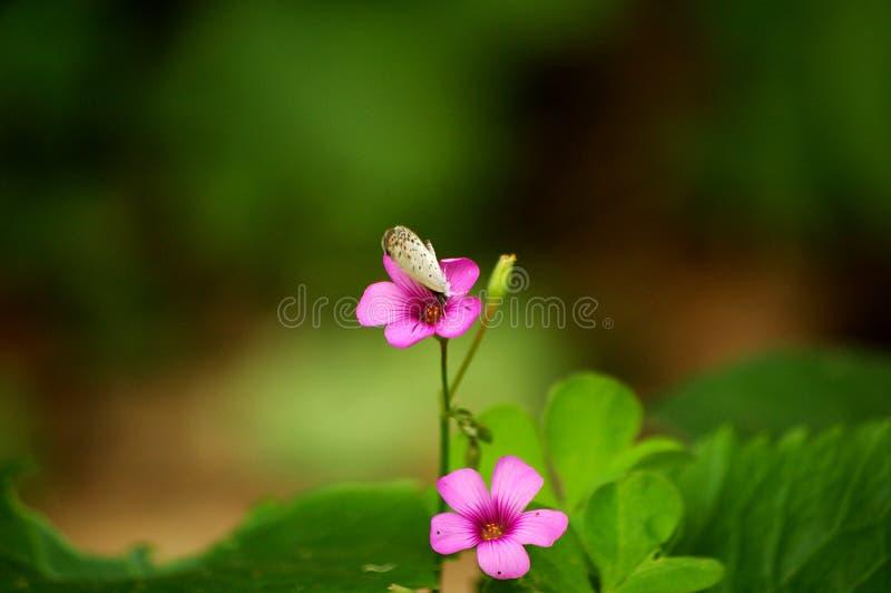 Kleine vlinder royalty-vrije stock afbeelding