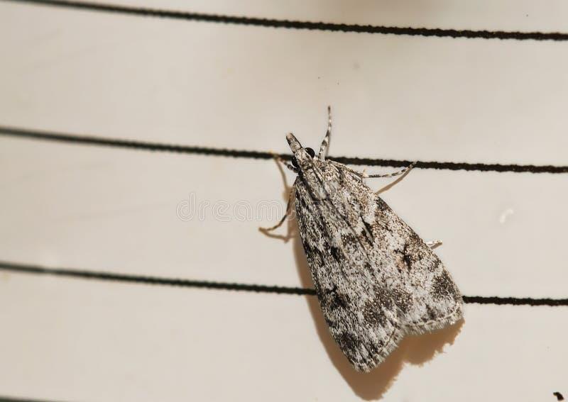 Kleine vlinder die in het gras leeft royalty-vrije stock afbeeldingen