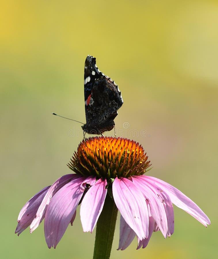 Kleine vlinder stock foto