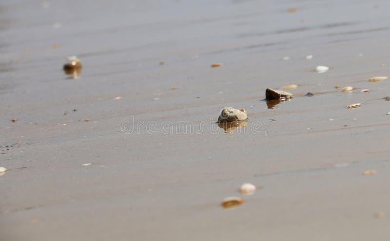 Kleine vlotte opgepoetste stenen op het strand in het zand op achtergrond van overzees, golven en hemel Het exemplaarruimte van d stock foto
