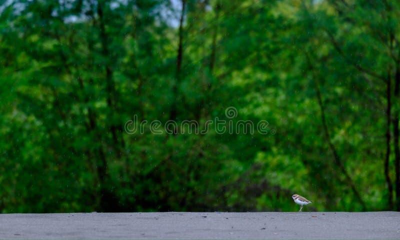 Kleine vogel stock foto