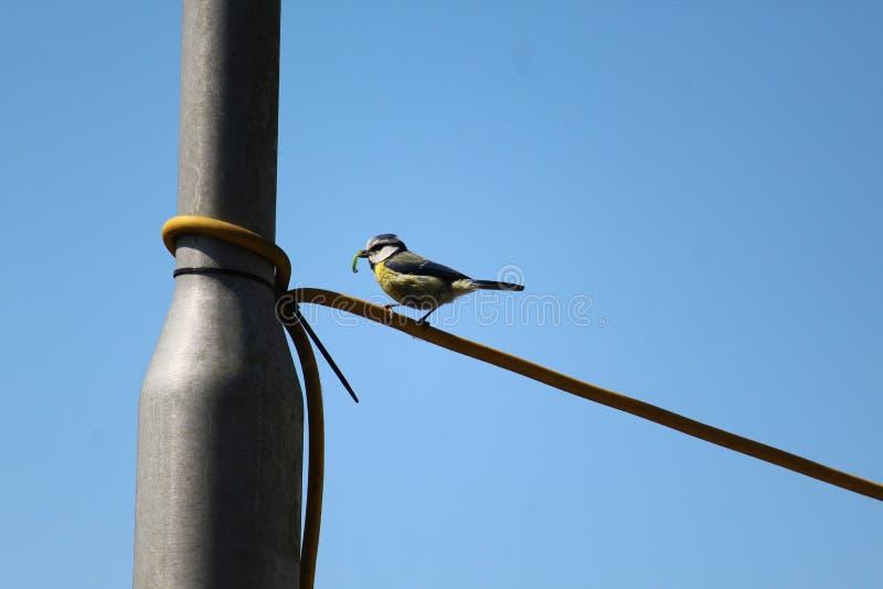 Kleine Vogel Dichte Omhooggaand royalty-vrije stock foto's