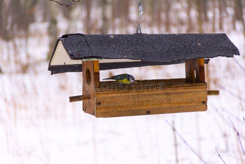 Kleine vogel en voeders stock foto