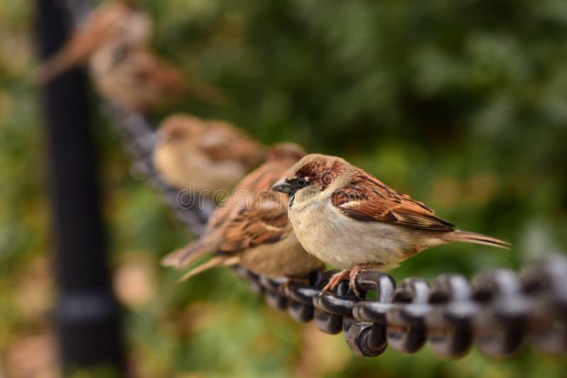 Kleine Vogels op een Grote Zwarte Ketting royalty-vrije stock foto