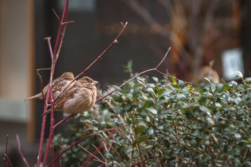 Kleine vogels op een koude dag in de stad royalty-vrije stock afbeeldingen