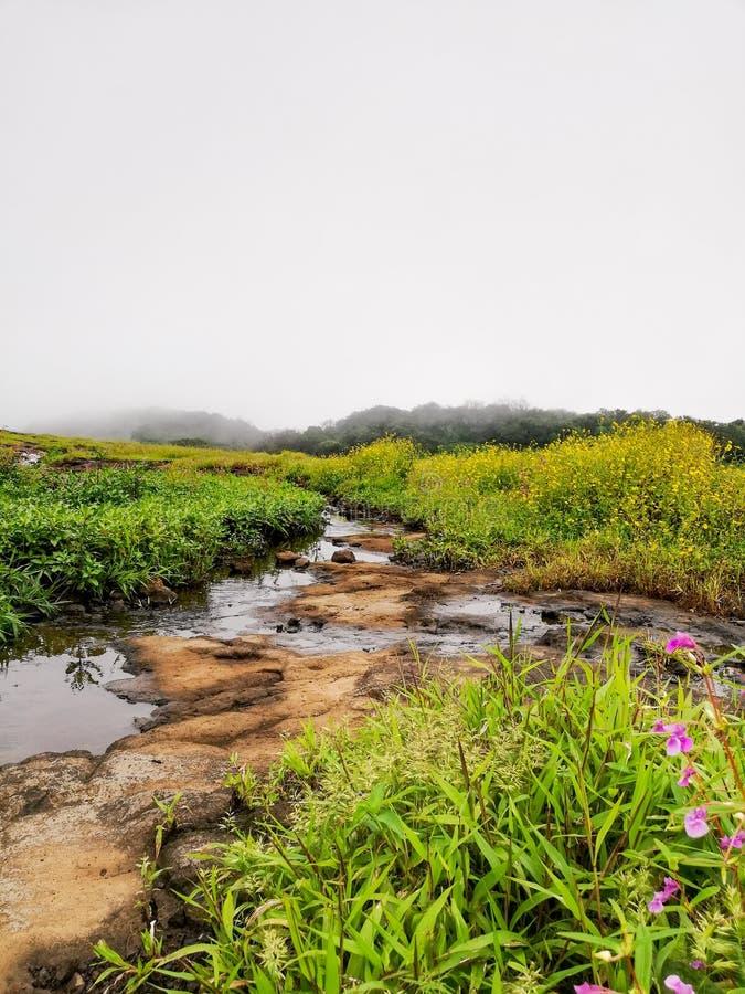 Kleine waterslepen in lonavala groen royalty-vrije stock fotografie