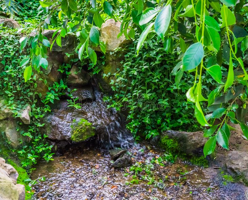 Kleine waterval in een tropische tuin met groene bladeren, Decoratie voor de binnenplaats, aardachtergrond stock foto's