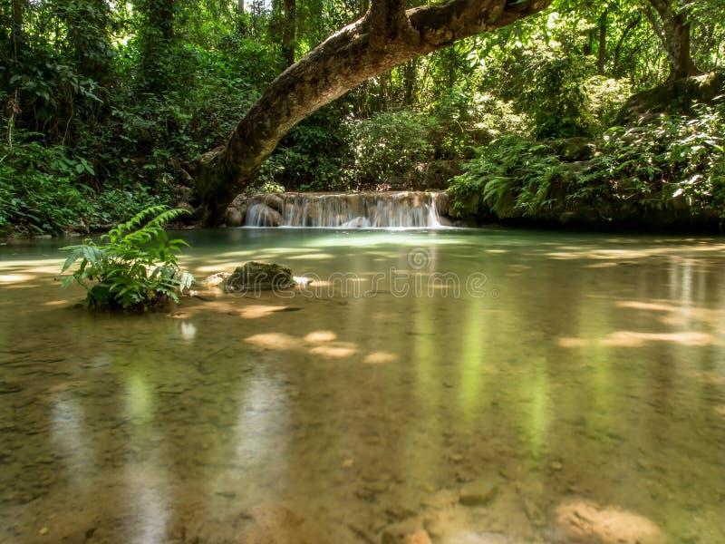 Kleine waterval en rivier in bos stock afbeeldingen