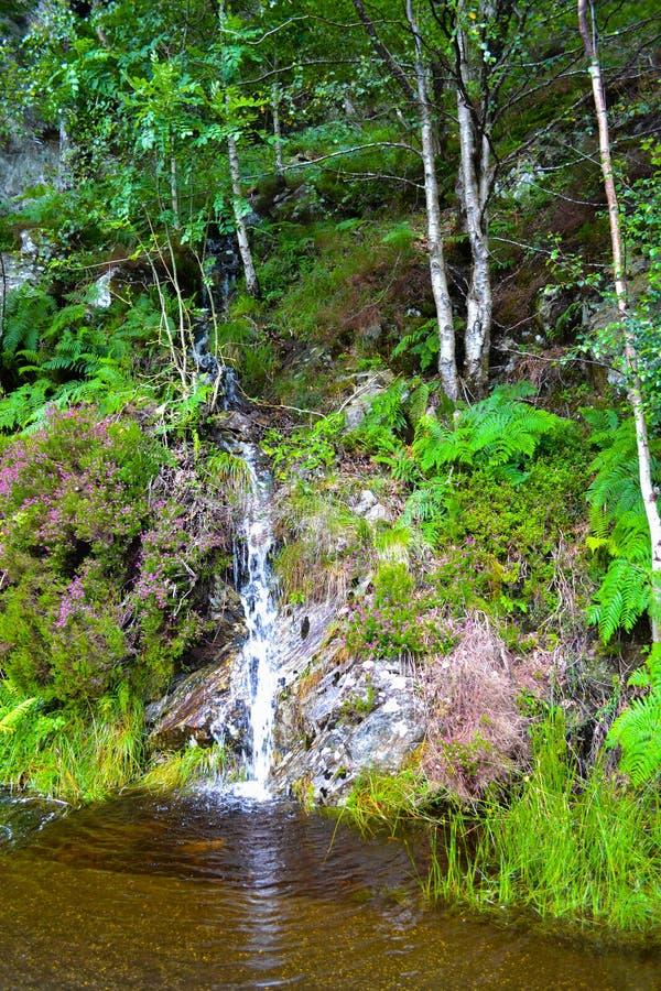 Kleine waterval in midden van bos in Loch Katrine, in Hoogland royalty-vrije stock fotografie