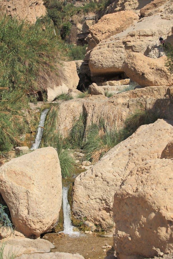 Kleine Waterval & Stroom in de Oase van Ein Gedi royalty-vrije stock afbeeldingen