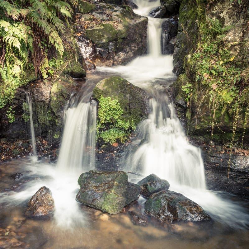 Kleine waterval in zwart bos, Duitsland stock foto's