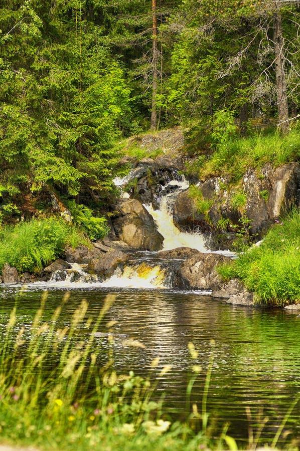 Kleine watervalstroom in de bosrivier stock fotografie