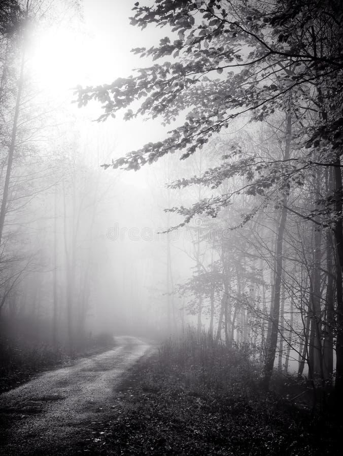 Kleine weg in mist royalty-vrije stock foto's