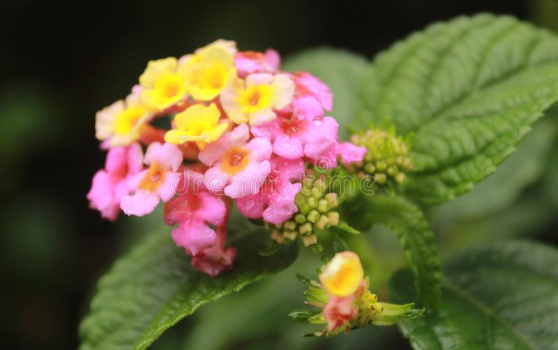 Kleine wilde Blumen mit grünem Hintergrund im kodaikanal stockfoto