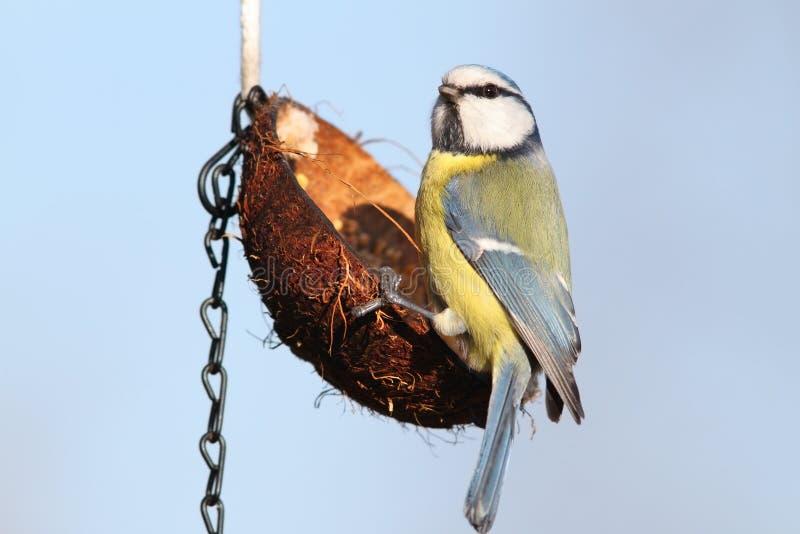 Kleine wilde tuinvogel op voeder stock foto's