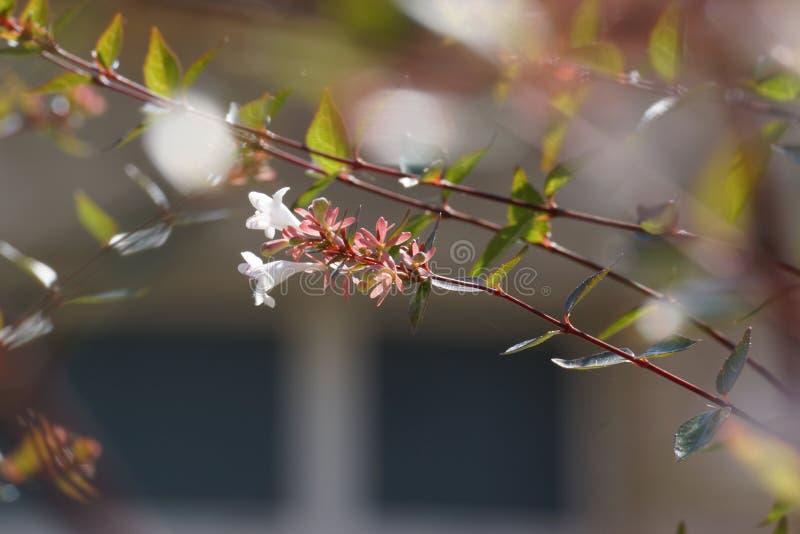 Kleine witte bloem op een takboom van een boom royalty-vrije stock afbeeldingen