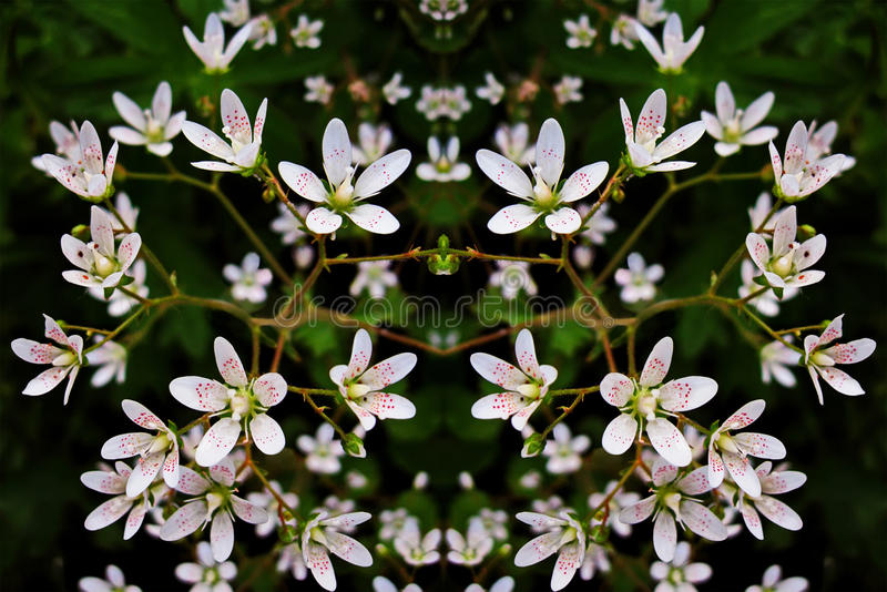 Kleine witte bloemen - achtergrond stock foto's