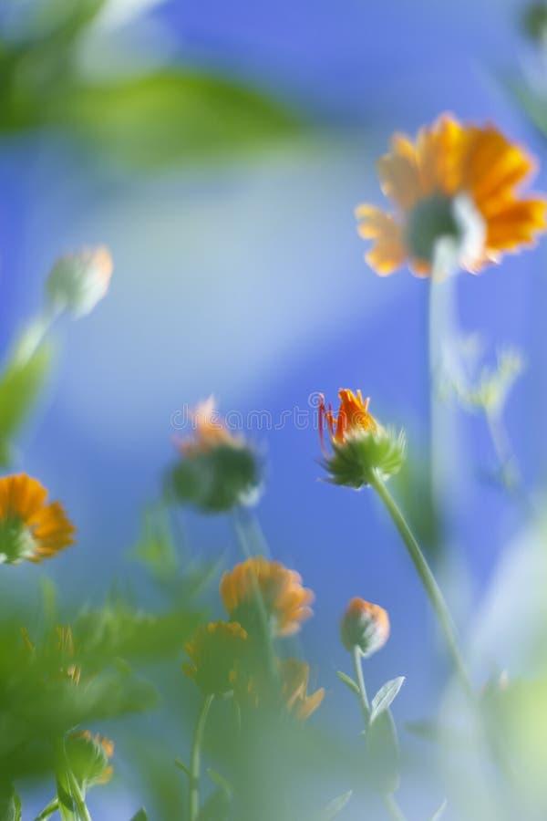 Kleine witte bloemen op gestemd op zachte zachte blauwe en roze achtergrond in openlucht close-upmacro stock foto