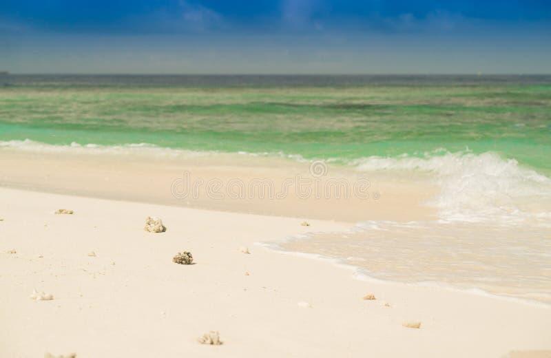 Kleine witte shells op het zand en de turkooise oceaan royalty-vrije stock fotografie