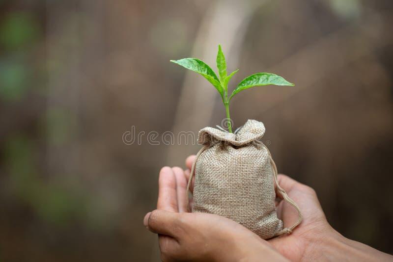 Kleine zaailingen die in menselijke handen, installatiebomen groeien om het globale verwarmen, Bosbehoud, de Dag van het Wereldmi royalty-vrije stock afbeelding